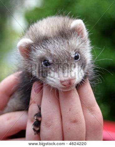 Cute, Cuddly & Furry
