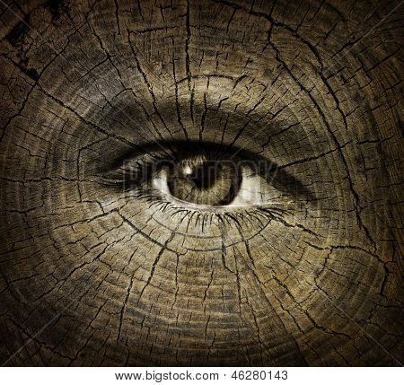 Aging or ageing concept with an open human eye on a wood grain texture of old tree rings as a health care and medical idea of getting older and the changes or decline in function in a person over time. poster