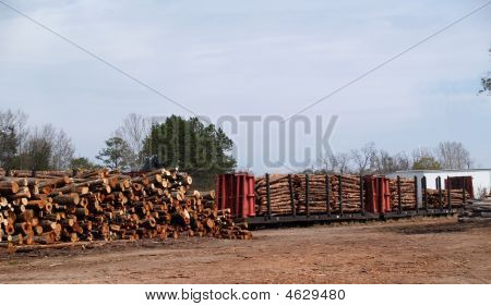 Railcar Loaded With Cut Trees