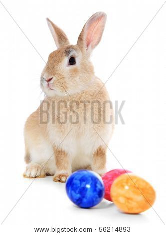 Cute little easter bunny. All on white background.