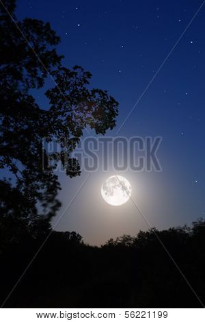night moon and tree silhouette