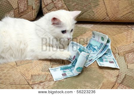 white cat count money on sofa poster
