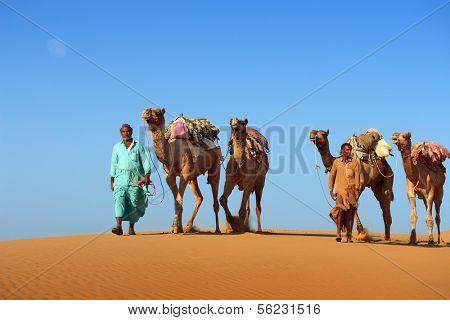 cameleers in desert - camels caravan on sand dune