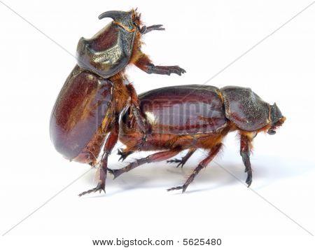 Bugs Sex