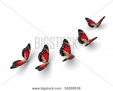 Five butterflies isolated on white. 3d illustration poster