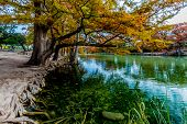 Emerald Green Crystal Clear Waters of the Frio River Surrounded by Beautiful Fall Foliage on the Giant Bald Cypress Trees at Garner State Park, Texas. poster