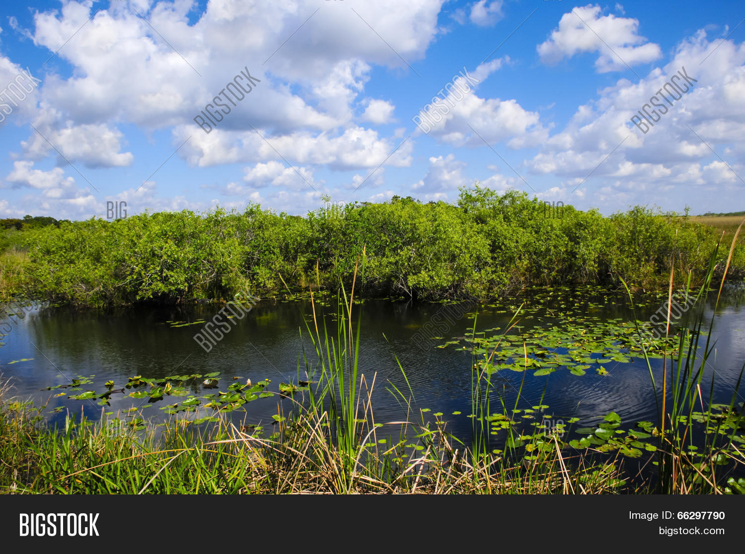 an overview of the everglades This is a place like no other established in 1947 to preserve the biological diversity and resources of the everglades ecosystems, everglades national park protects 15 million acres of florida.