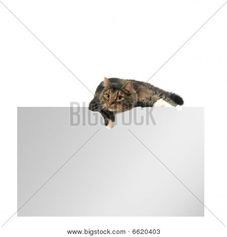 A blank layout with empty copy space with cat laying on top of it. isolated on white. poster
