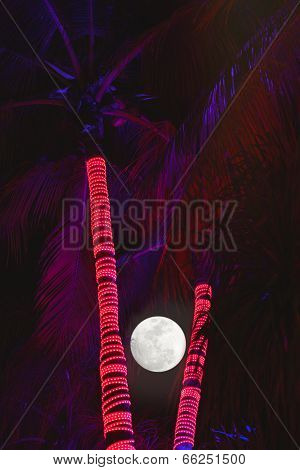 Palm Tree Nights
