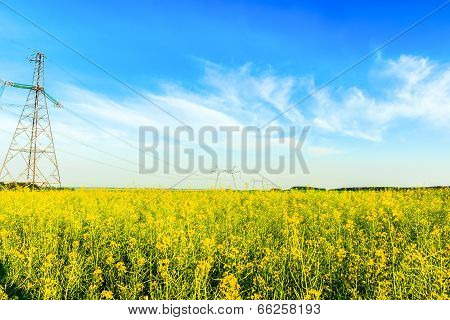 High voltage powerlines in rapeseed field