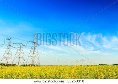 Electricity powerlines in rapeseed field
