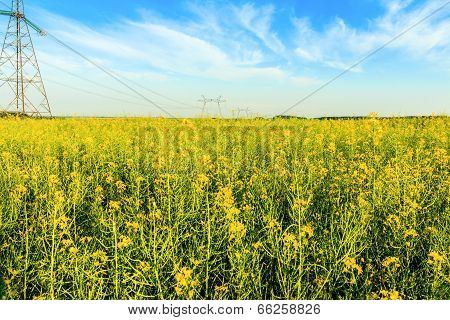 High voltage transmission towers in yellow field