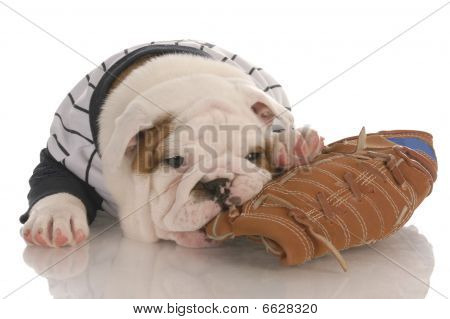 Bulldog Puppy Chewing On Ball Glove