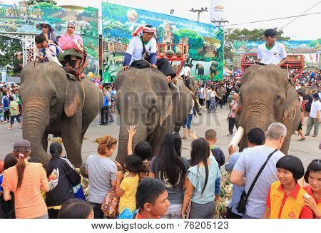 traveler take photo and give food to elephant