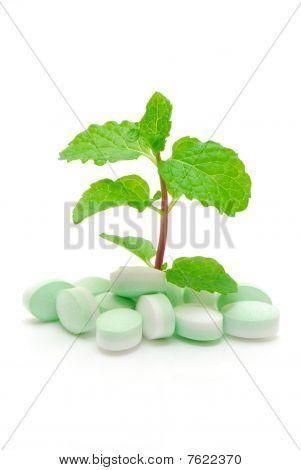 Fresh Breath Mints