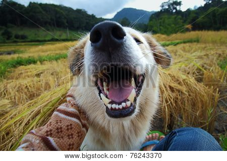 Laughing Dog