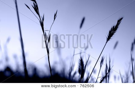 wheat grains 3