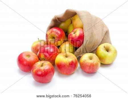 Ripe Apples In Burlap Sack