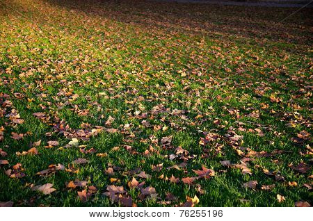 Autumnal Covered Grassland
