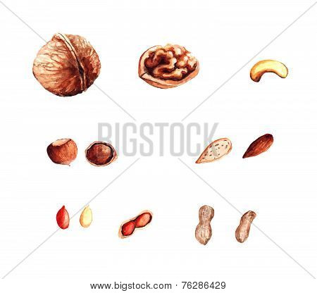 Illustration with different isolated watercolor nuts