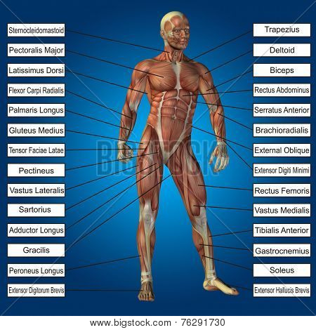 Concept or conceptual 3D male or human anatomy, a man with muscles and text on blue gradient background poster