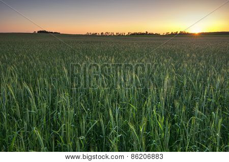 Wheat field at sunset, Midwest, USA