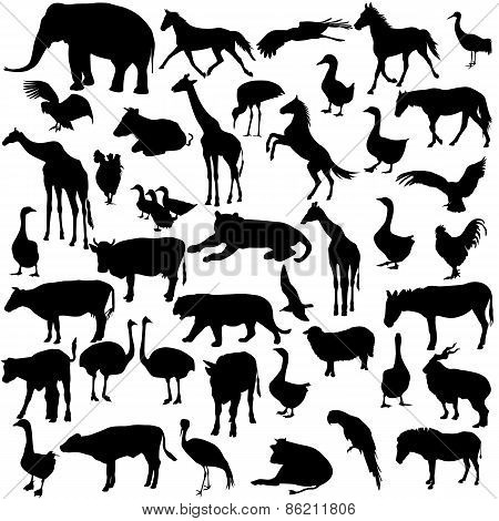 Set  silhouettes  animals and birds in the zoo collection. Vecto