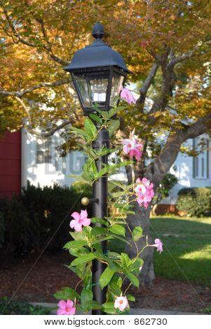 Lamp Post with Mandevilla