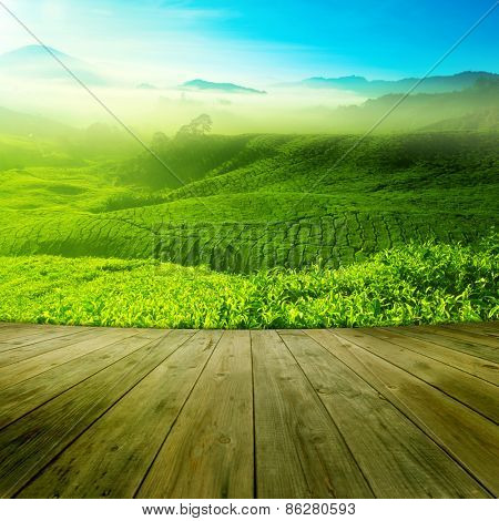 Wood platform landscape view of tea plantation with blue sky in morning. Beautiful tea field Cameron Highlands in Malaysia.