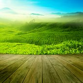 Wood platform landscape view of tea plantation with blue sky in morning. Beautiful tea field Cameron Highlands in Malaysia. poster