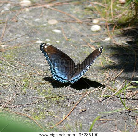 A very Colorful Blue Butterfly