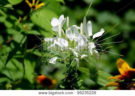 White Plant