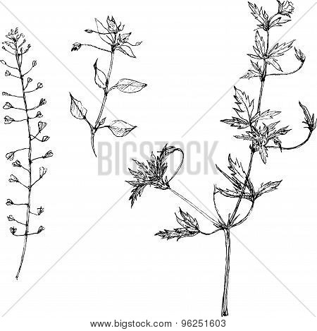 Set of pencil drawing herbs and leaves