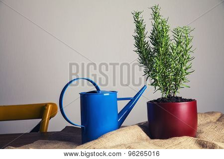 Pot With Rosemary On Kitchen Wooden Table