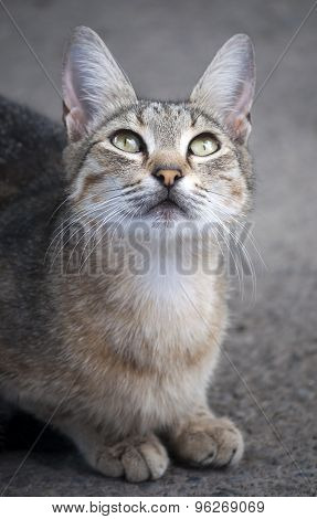 Cat Looks Up Sitting On The Pavement