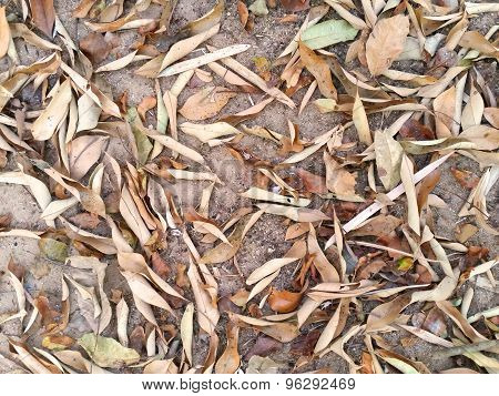 Dry Leaves Fall On Ground As Background