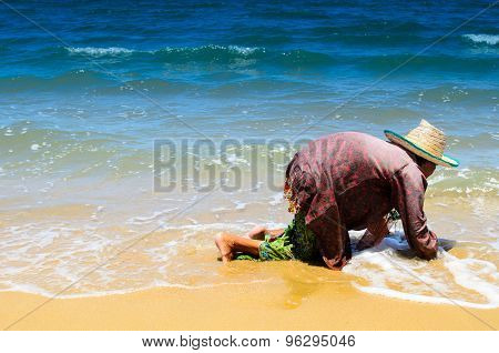 Lady Collecting Shells