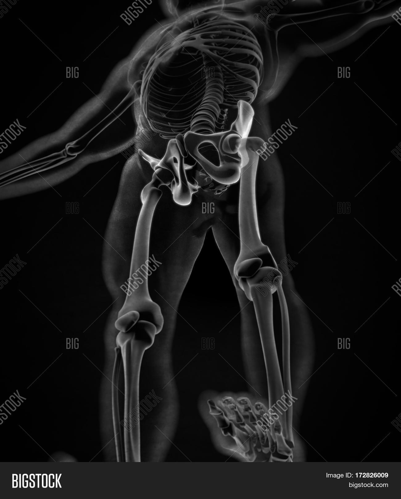 Imagen y foto Ilium Bone, Hip (prueba gratis)   Bigstock