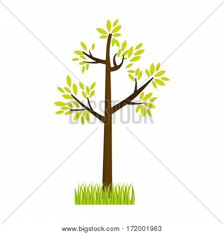 colorful silhouette tree leafy with bush vector illustration