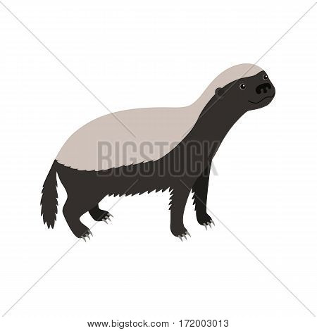Honey badger isolated on white background. vector illustration for children