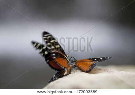 Butterfly's Mating
