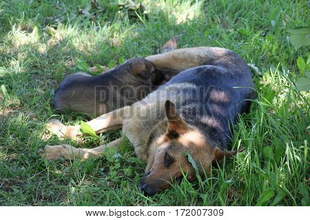 Happy dog feeding her puppies on the grass