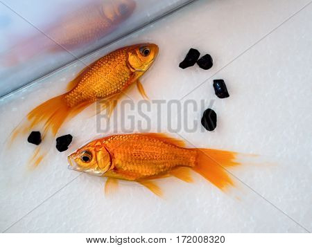 fish in the aquarium anhydrous. Fish dying.