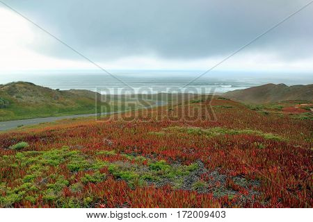 Beautiful Coastline with flowering plant. California, USA