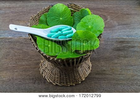 Asiatic Pennywort (Centella asiatica ) with pill in bamboo basket on wooden background