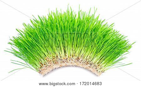 Young fresh sprouts of green grass with roots on a white background.
