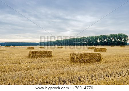 Stubble field with some bales of straw in the foreground at the end of sunny day in the Dutch summer season.