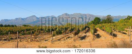 Grape Farm, Wellington, Cape Town South Africa