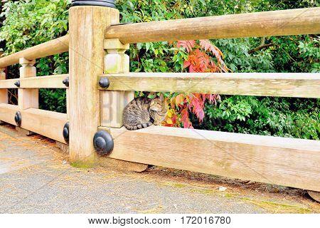 Cute cat sitting on wooden bridge railing Kyoto Japan
