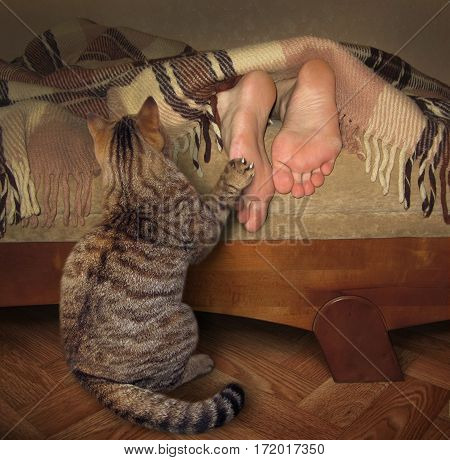 The cat wants to wake his sleeping owner because he is very hungry.